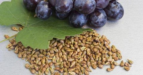 Extracto de Semilla de Uva: Todas las Propiedades de la Naturaleza de forma concentrada para tu Salud