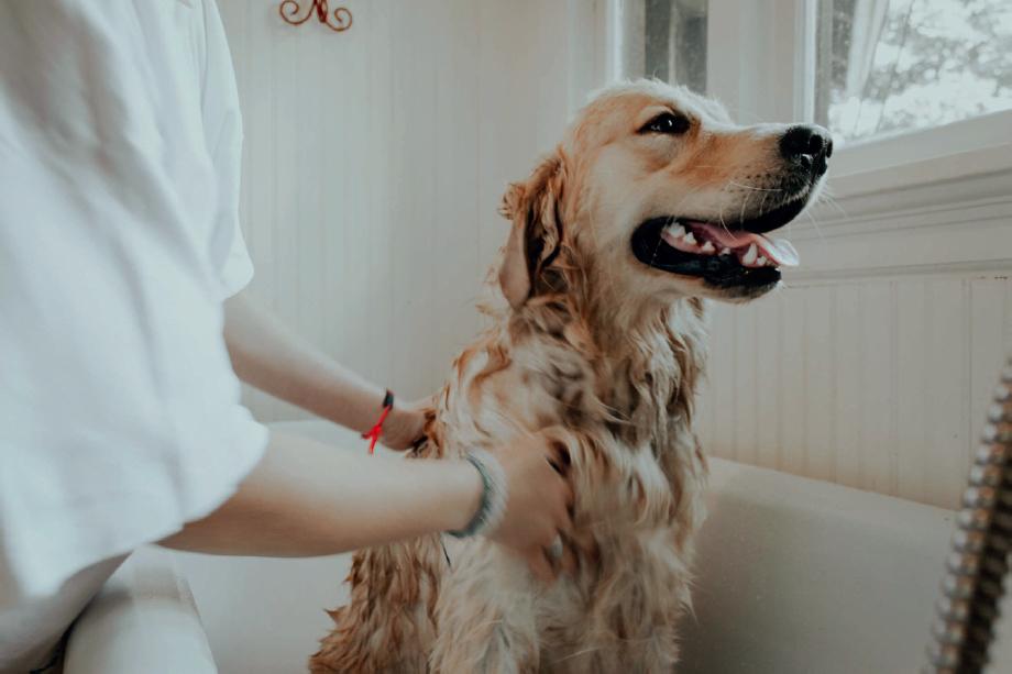 Remedios Naturales Para Tu Mascota
